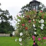 Nieprawidłowa pielęgnacja kwiatów