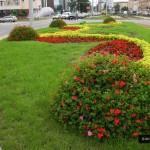 Kwiaty na rondzie
