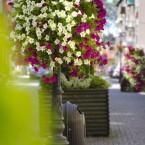 Kwiaty a wizerunek miasta
