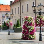 10 sposobów na zieleń miejską