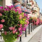 Za co Europa pokochała francuskie skrzynki kwiatowe?