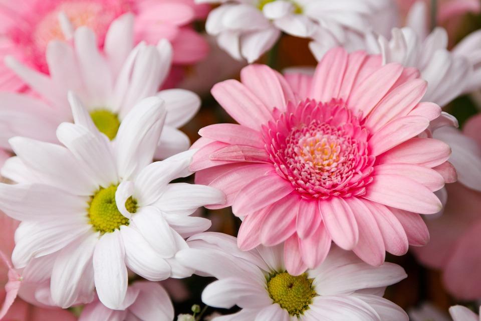 kwiaty na walentynki mowa kwiatów (1)