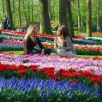 Wiosenny ogród Keukenhof
