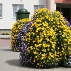 Jak ukwiecić miasto na wiosnę?