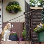 Dom, taras, ogród w rozkwicie