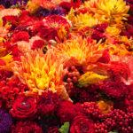 Jakie kwiaty kwitną jesienią?