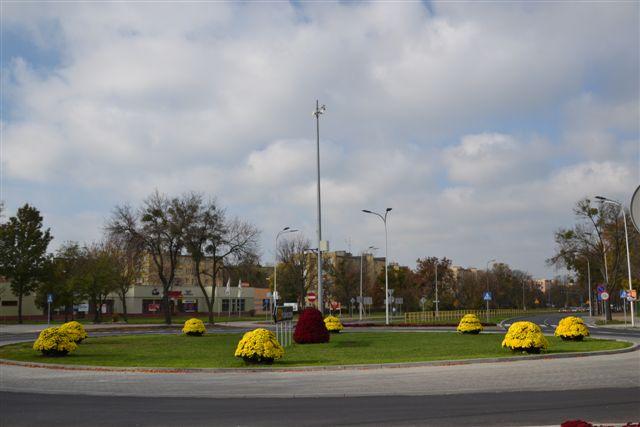 kwietniki miejskie terra chryzantema