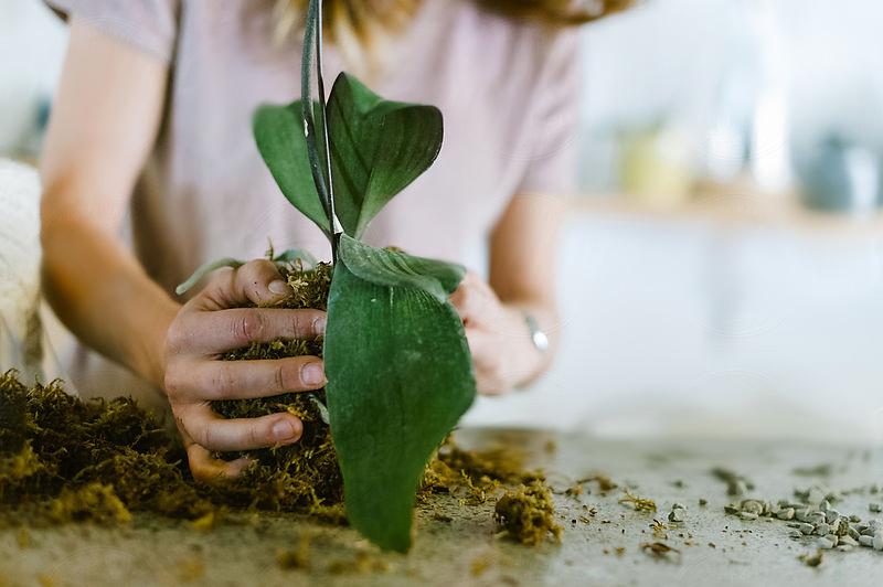 przesadzanie-roślin