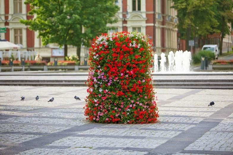 kwietniki miejskie terra