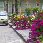 Czerwieńsk