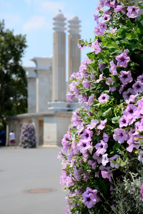 kwietniki miejskie terra bułgaria (6)