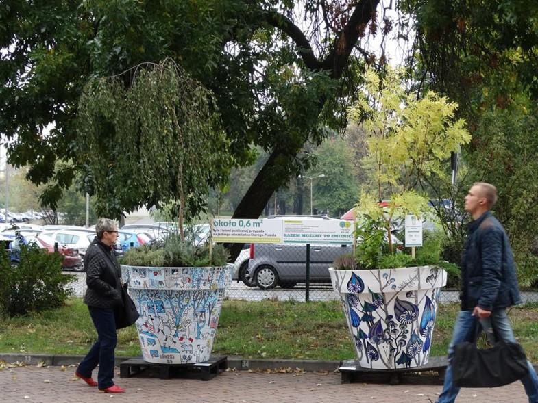 delegatura Łódź Bałuty, wędrujace drzewa nunoni (5)
