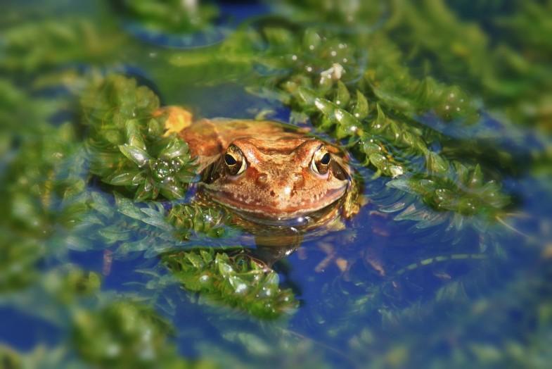 woda w ogrodzie (2)
