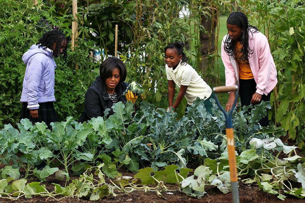 Ogrodnictwo miejskie – snobistyczne czy ratunkowe (1)