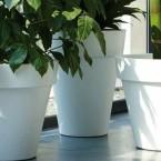 Jak wybrać zdrowe rośliny?