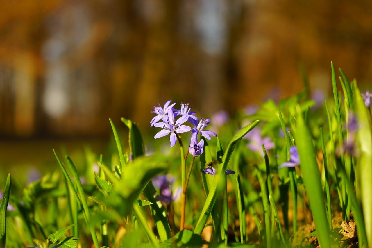 co kwitnie w marcu (1)