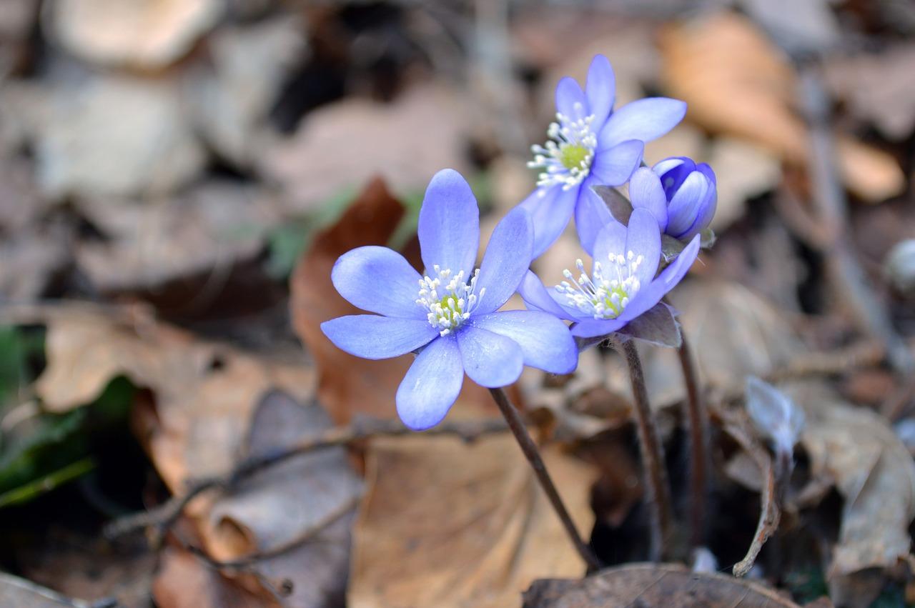 co kwitnie w marcu (2)
