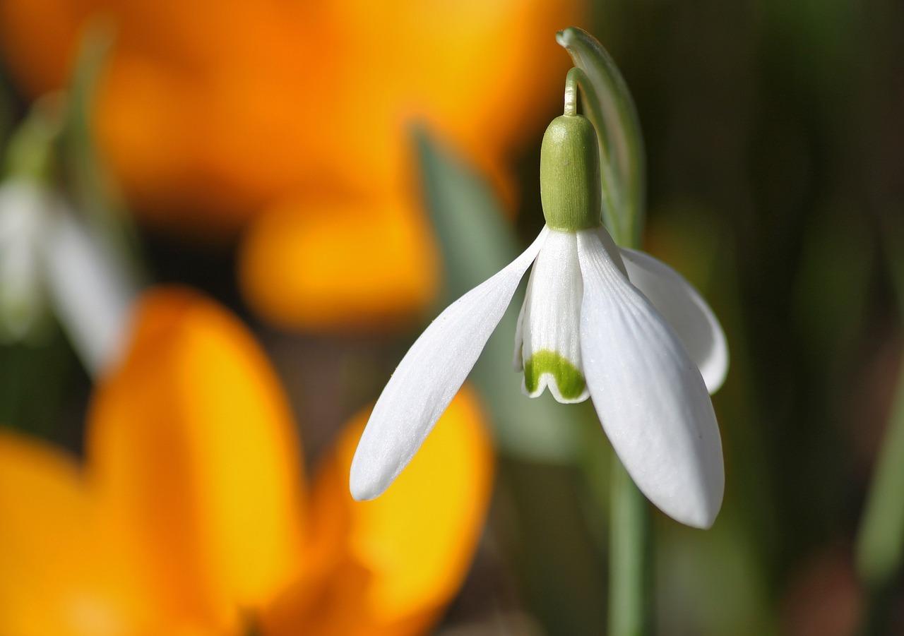 co kwitnie w marcu (3)
