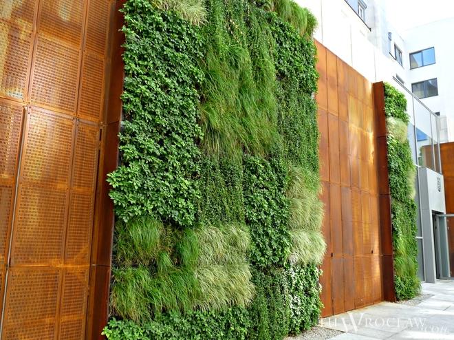 zielone ściany wrocław (3)