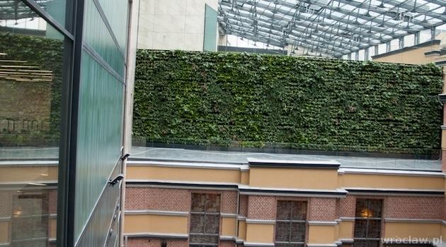 zielone ściany wrocław (4)