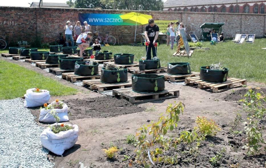 ogród społeczny szczecin 2016 (3)