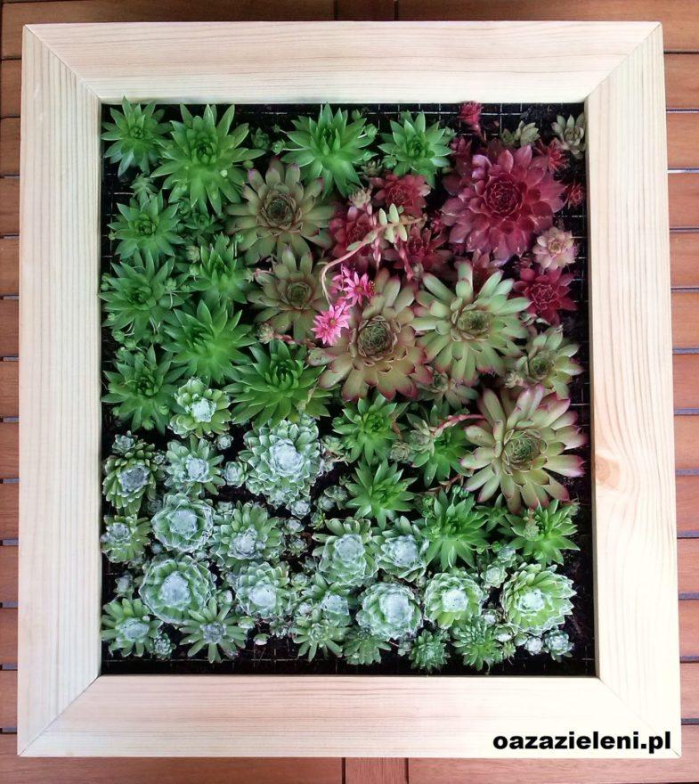 obraz z sukulentów oaza zieleni inspirowani (11)