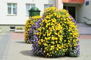 wieze-kwiatowe-terra-3