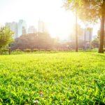 Jak zapewnić miastu piękną zieleń?