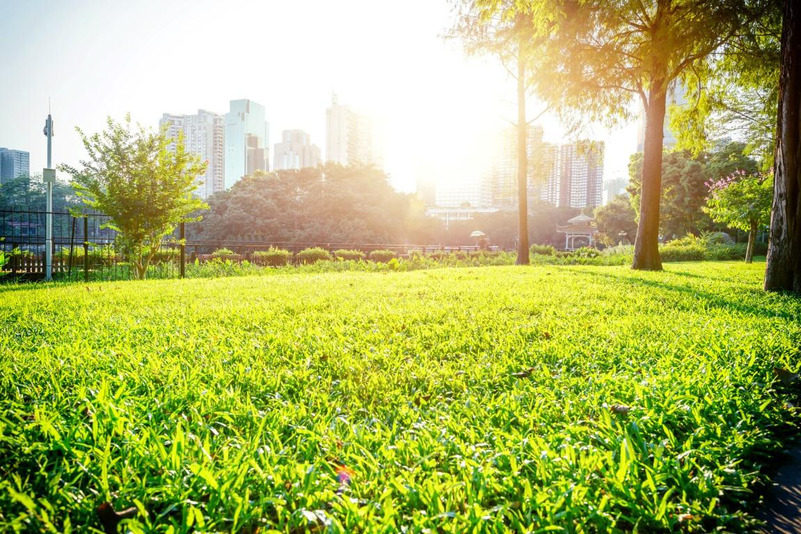 Jak zapewnić miastu piękną zieleń hydrogel