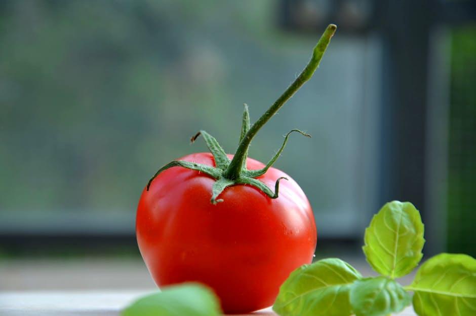 uprawa pomidorów na balkonie (3)