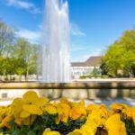 Jak wprowadzić wiosnę do miast?