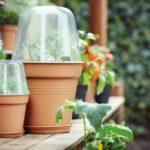 Twój własny ogród, czyli zielone nowości w sklepie Make it Home