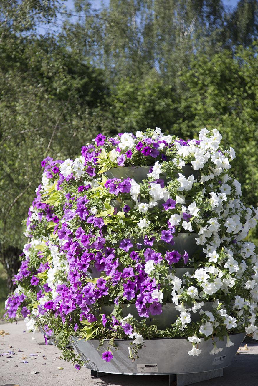 kompleksowa usluga terra wieze kwiatowe