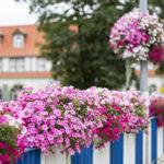 Kwiatowa dekoracja w skrzyniach, czyli most do natury