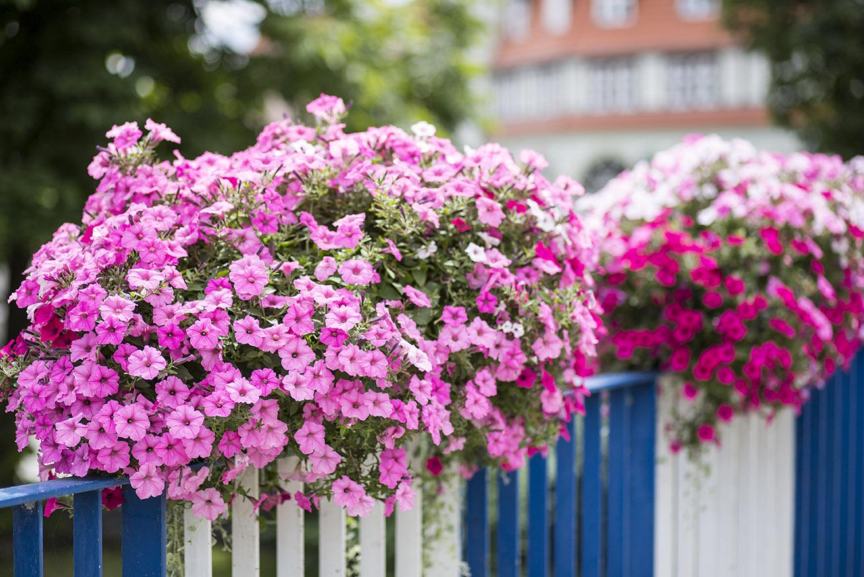 skrzynki kwiatowe terra międzyrzecz atech