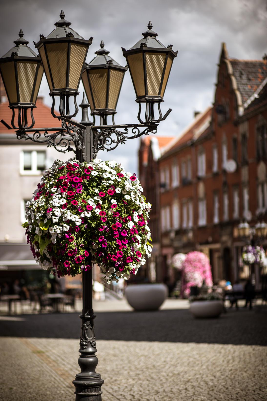 wiszące wieże kwiatowe terra ukwiecenie miasta świebodzin (8)