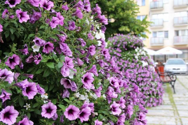 terra flower power strzelce opolskie