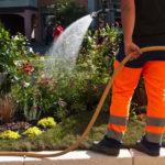 Jak przedłużyć wegetację miejskich roślin?