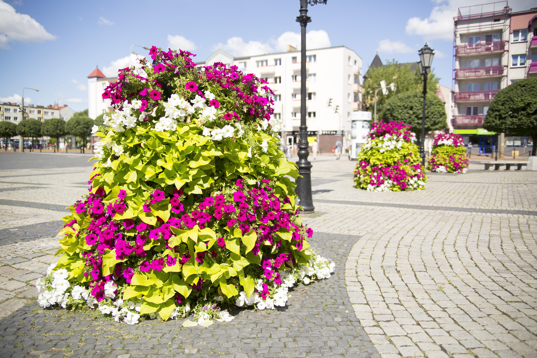 wieże kwiatowe kwietniki miejskie terra piątka ogrodowa Gorzów H1200 Rynek Surfinie Ipomoea