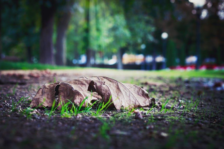Hydrożel na ratunek zieleni miejskiej