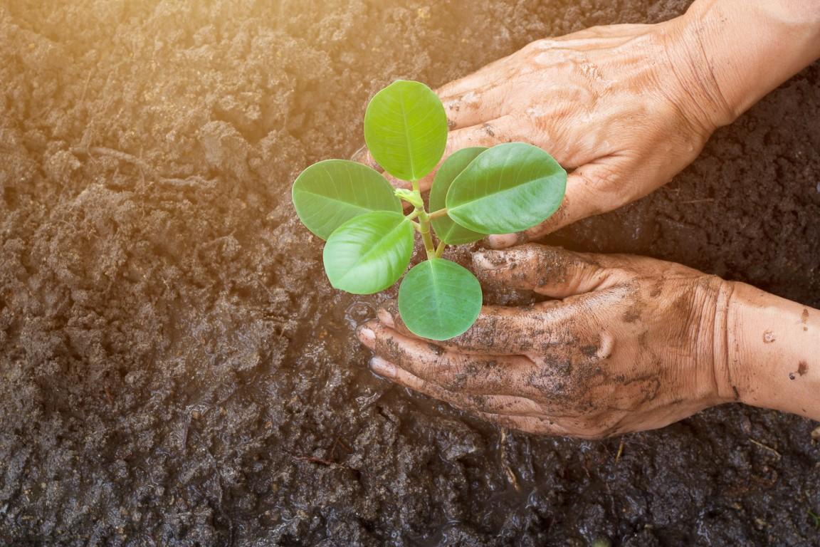rośliny-dla-miejskich-nasadzeń-inspirowani-naturą-blog