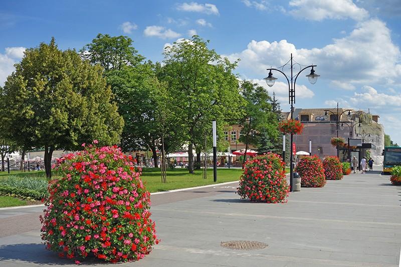 zieleń miejska, kwietniki miejskie, hydrogel terra