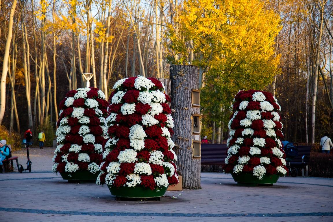 wieże kwiatowe, jesienne ukwiecenie