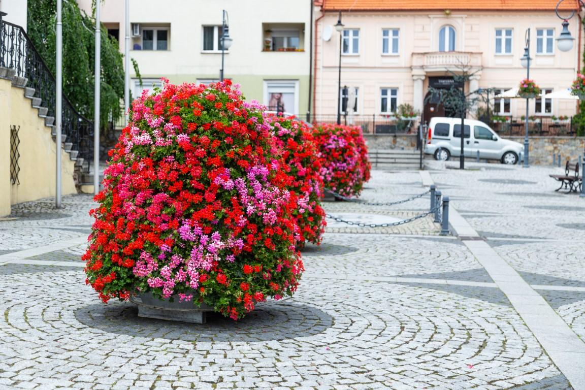 wieże kwiatowe kwietniki miejskie terra trzebnica 3
