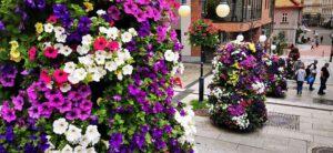 Bielsko-Biała ma ogromny Flower Power! Podsumowaliśmy kwiatowy plebiscyt