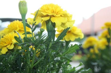 W centrum miasta kwiaty