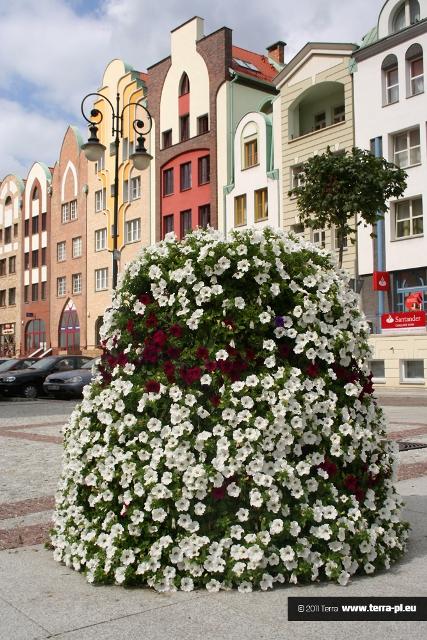 Piszą o nas: Targi innowacyjne z kwiatkami i biogazem (Gazeta Wyborcza – Zielona Góra)