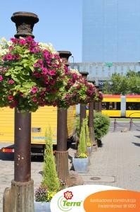 Jak w jednej chwili można stworzyć miasto kwiatów?