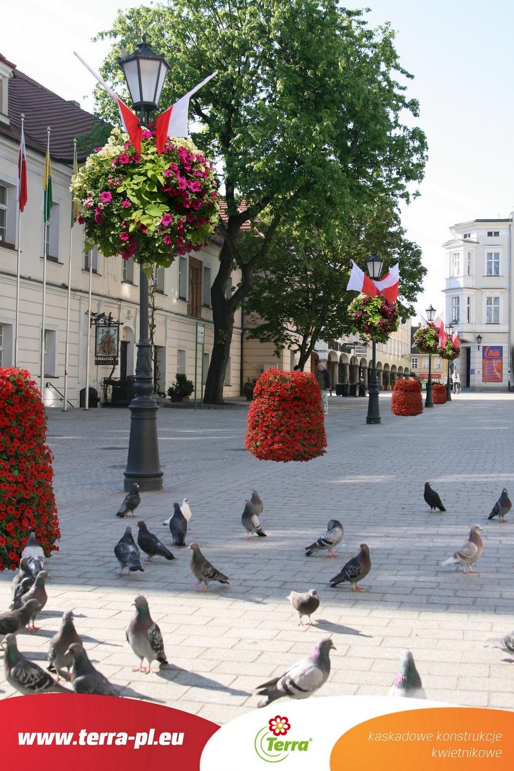 Kwiaty w mieście Zielona Góra – wizualizacja