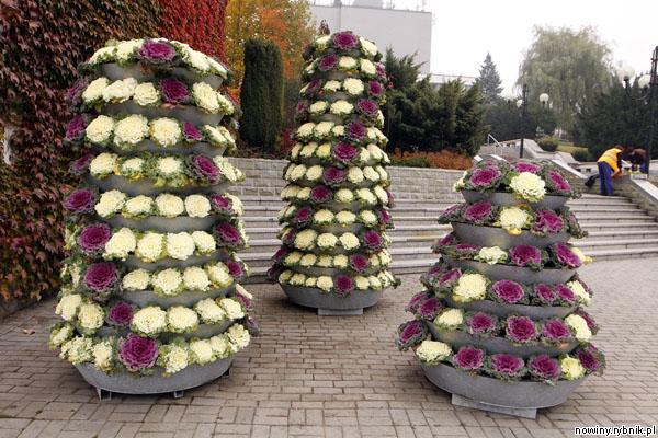 Kwiaty w mieście na jesień i zimę